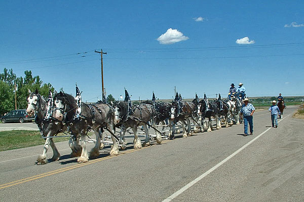 Clydesdales_June_2012_2