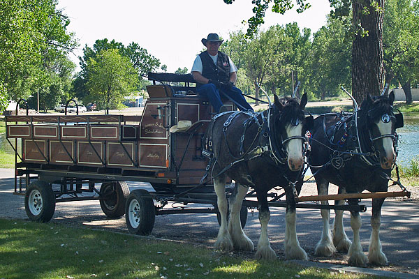 Clydesdales_June_2012_7